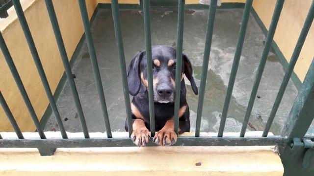 Son Reus sigue lleno de perros que esperan adopción.