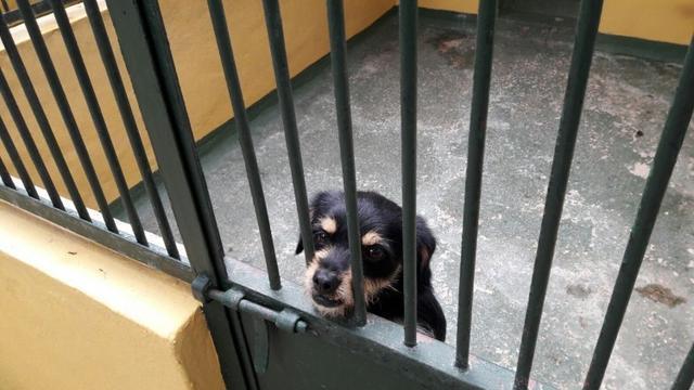 Muchos perros están a la espera de un hogar.