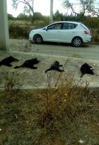 gatos muertos
