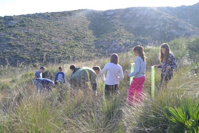Los alumnos de Capdepera reforestan Sa Duaia