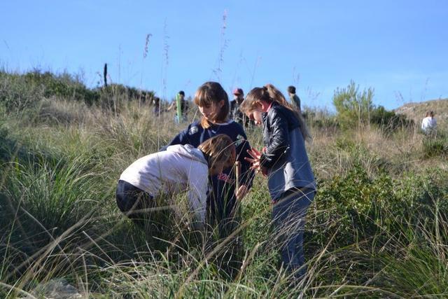 Los alumnos de Capdepera han plantado pinos, encinas y acebuches