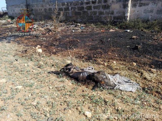 260617 bombers incendio son banya perro muerto