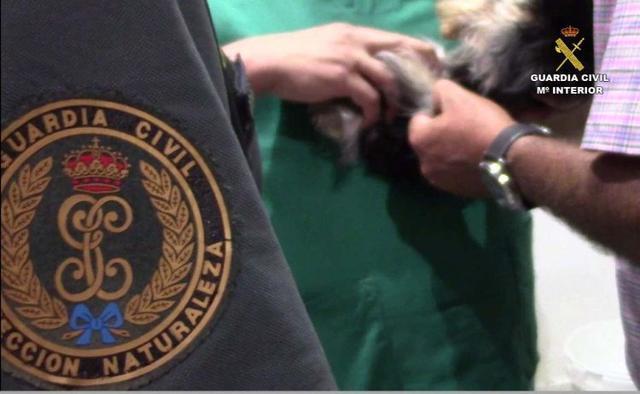 090817 inspeccion veterinario seprona