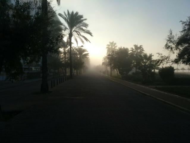 Niebla palma