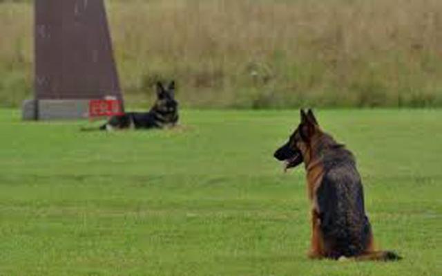perros policia k9 2