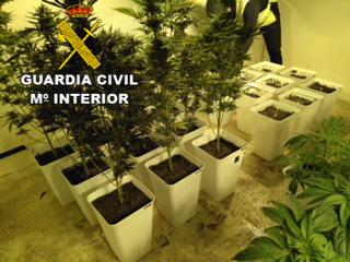 20180125 plantacion marihuana ibiza 2