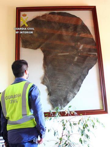 20180129 op LOXODONTA oreja elefante seprona