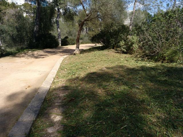 Castell Bellver parque bosque 2