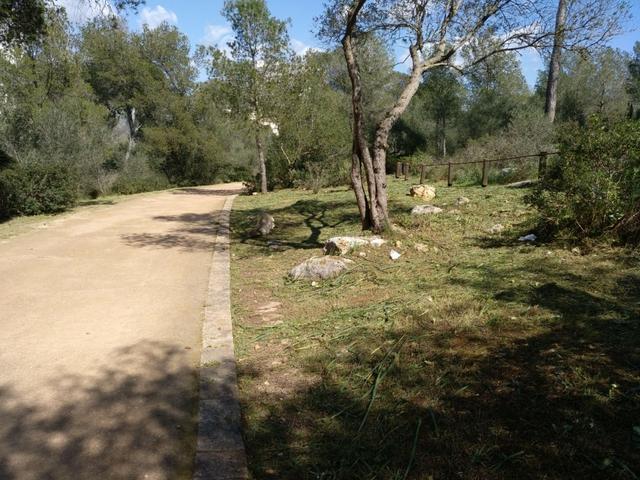 Castell Bellver parque bosque 4