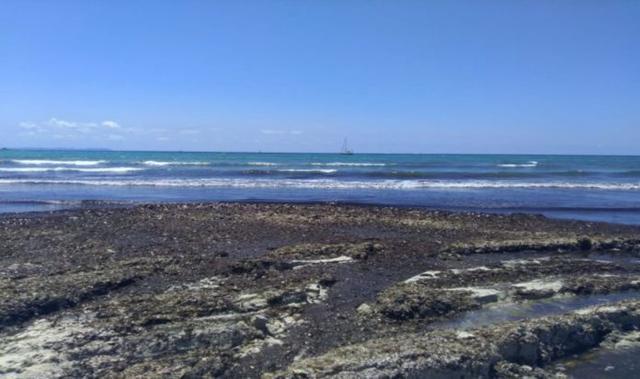 Algas en la playa de Es Trenc