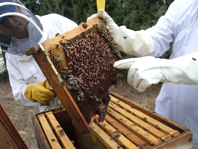 Europa Press/Archivo. Los apicultores son el sector más afectado por esta especie invasora