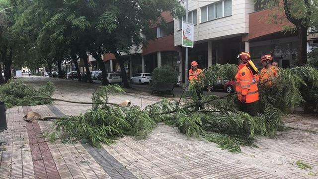 La fuerza del agua ha tumbado árboles (Foto: AJ. Inca)