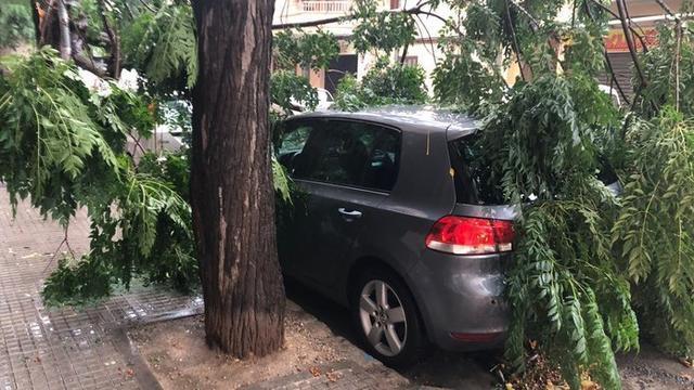 Un vehículo, sepultado por las ramas de un árbol (Foto: Aj. Inca)