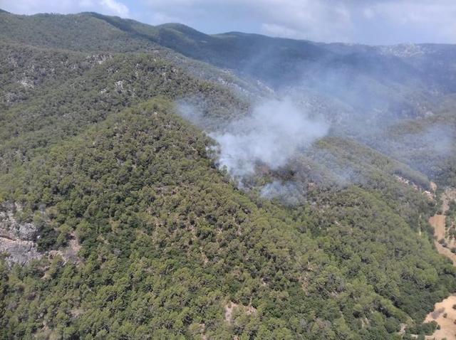 El fuego ha quemado 0,5 hectáreas de pinar (Foto: IBANAT)