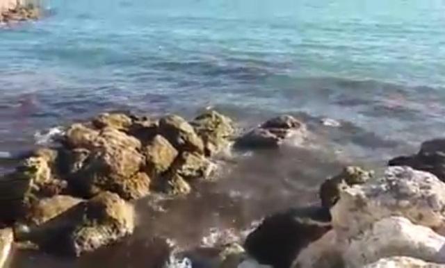 Una gran mancha marrón de vertidos fecales en Palma (Archivo)