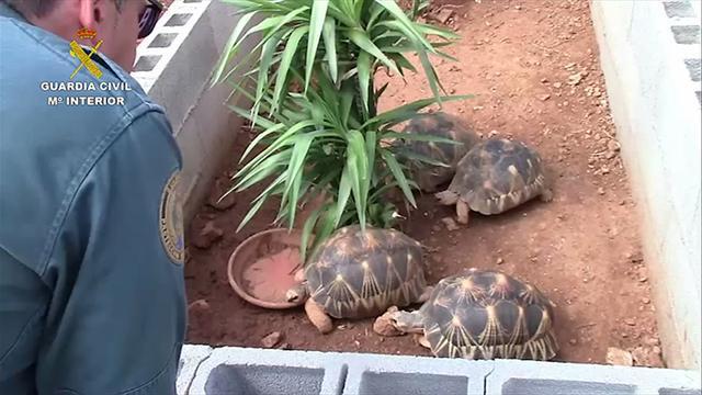 Un agente descubre durante el registro el criadero de tortugas