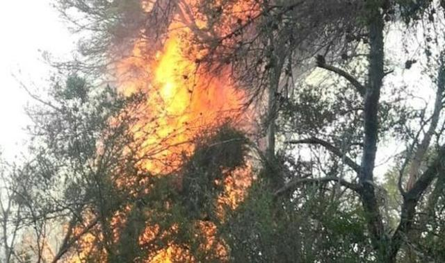 Se han quemado 11,46 hectáreas de pinar (Foto: Ibanat/Archivo)
