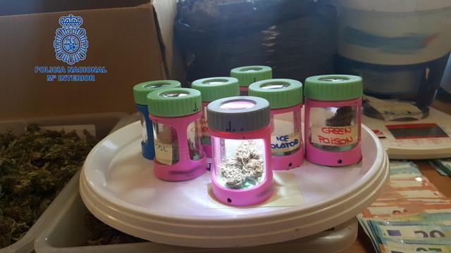 Los tipos de marihuana estaban separados y etiquetados (Foto: CNP)