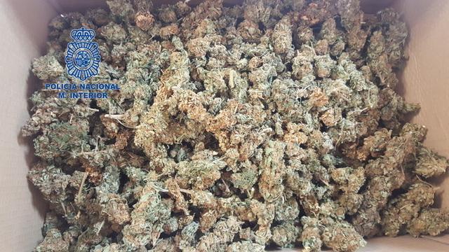 Gran cantidad de marihuana lista para su consumo (Foto: CNP)