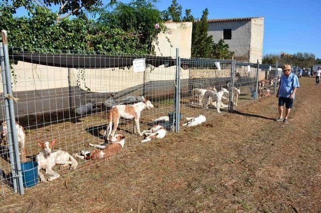 Los animales no faltarán en la Fira (Foto: Facebook Aj Santanyí)