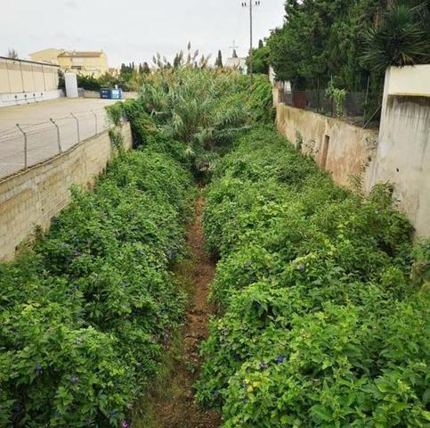 En la imagen el torrente de Muro de Sa Pobla, que más bien parece un bosque