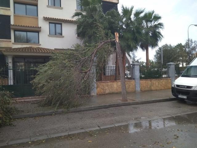 Uno de los árboles caídos (Foto: Aj Palma)