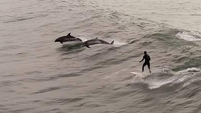 El bombero californiano surfeando junto a los delfines