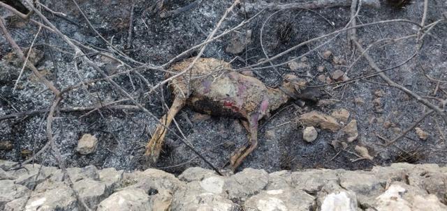 El Ibanat prevé que el incendio se dé por estabilizado este jueves (Foto: Ibanat)