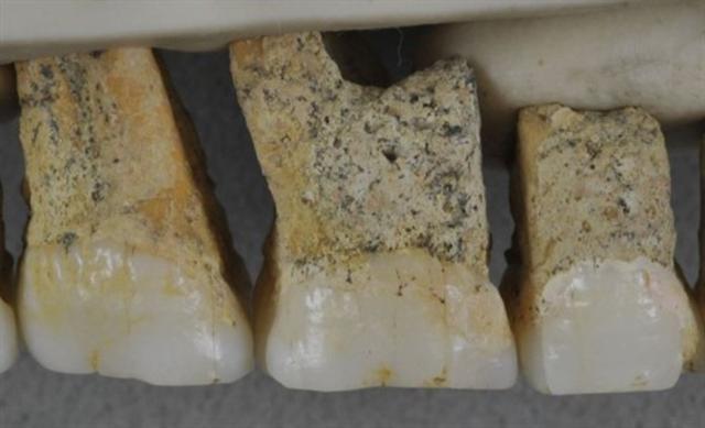 Los investigadores descubrieron los restos de al menos dos adultos y un menor dentro de los mismos yacimientos arqueológicos
