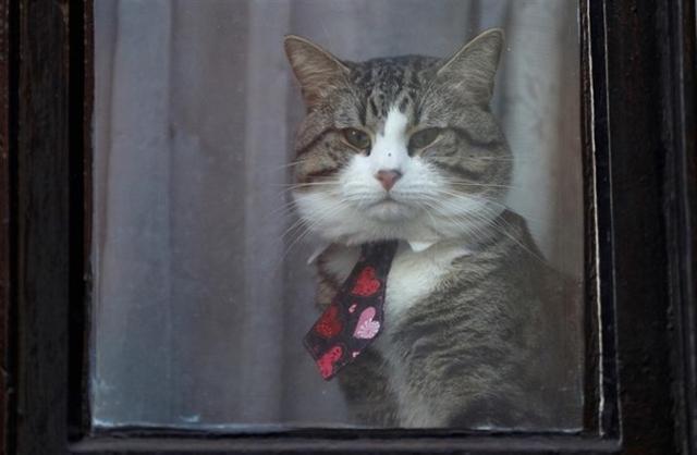 El felino se pasaba las horas observando por la ventana de la embajada ecuatoriana