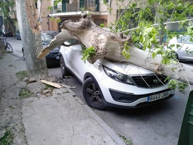 El viento ha provocado la caída de árboles sobre vehículos estacionados (Foto: Twitter Policía Sóller)