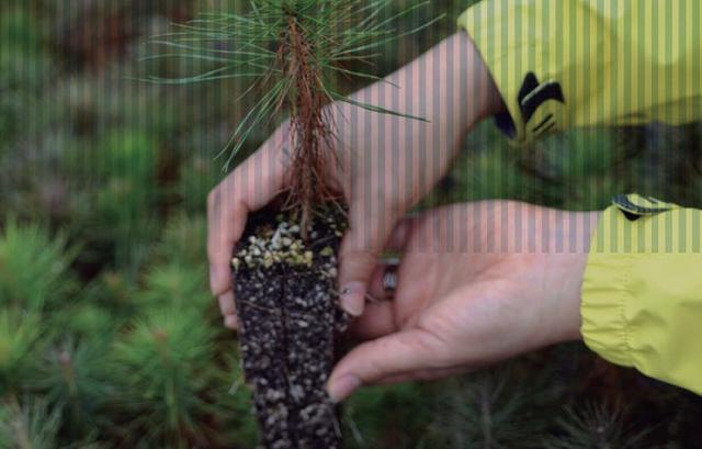 Huella de carbono (Foto: Endesa)