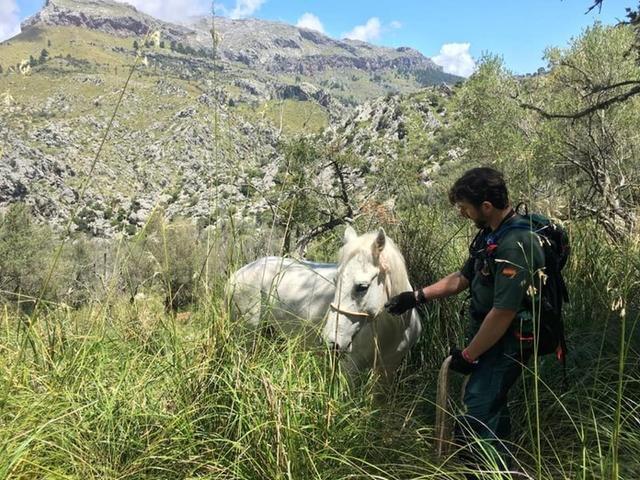 El precioso caballo junto a uno de sus rescatadores (Foto: Facebook Salvem la Serra de Tramuntana)