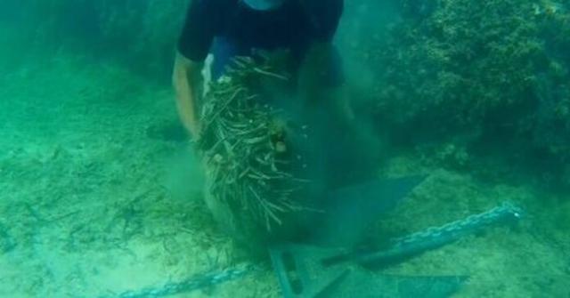 Secuencia del vídeo de Salvem Portocolom