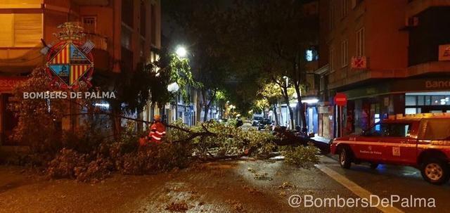 Bomberos y Policia Local de Palma han trabajado esta madrugada en la retirada de un árbol caído en plaça Progreso/ c/. Annibal (Foto: @BombersDePalma